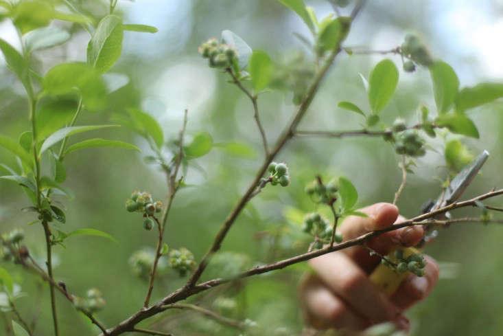emily  20  thompson  20  foraging  20  berries
