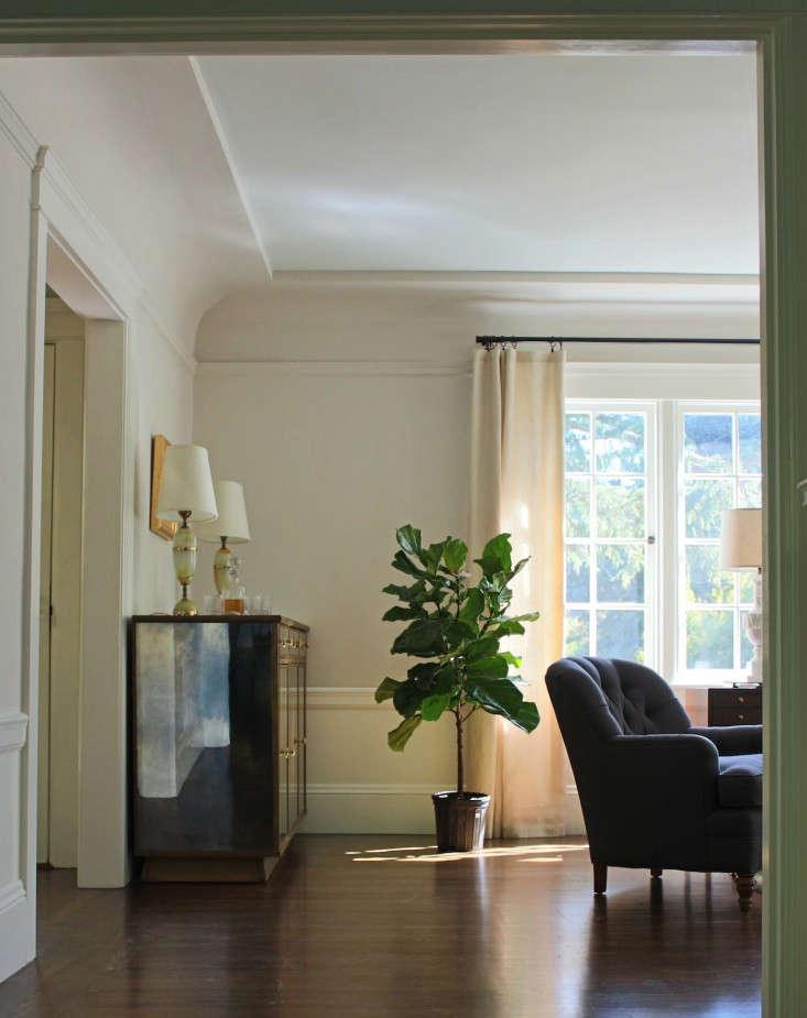 fiddle  20  leaf  20  fig  20  living  20  room
