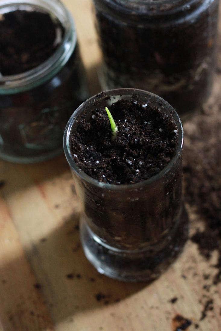 fill  20  jar  20  with  20  moistened  20  potting  20  soil