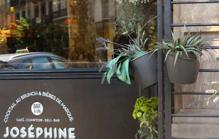 josephine  20  plants  20  3