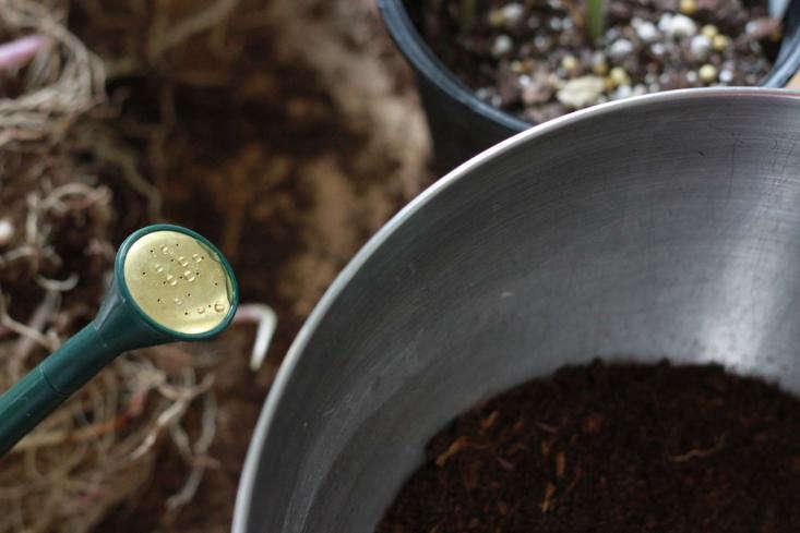 moisten  20  potting  20  soil  20  before  20  you  20  begin