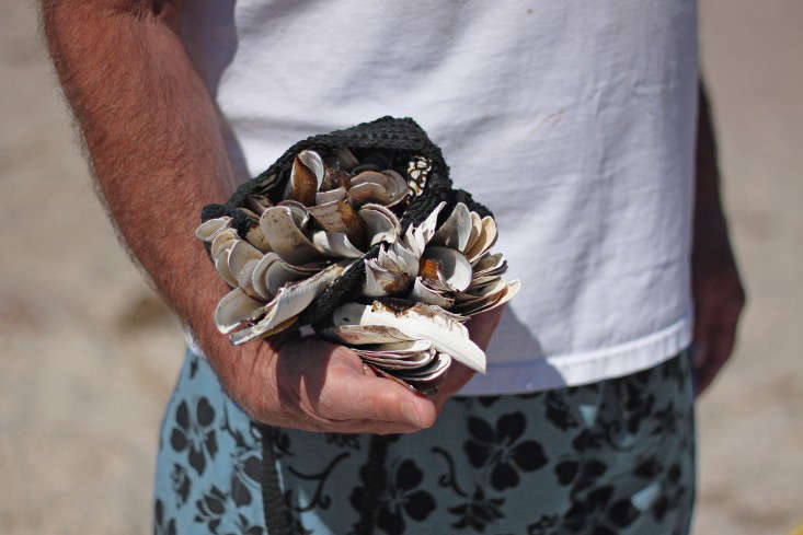 razor  20  clams