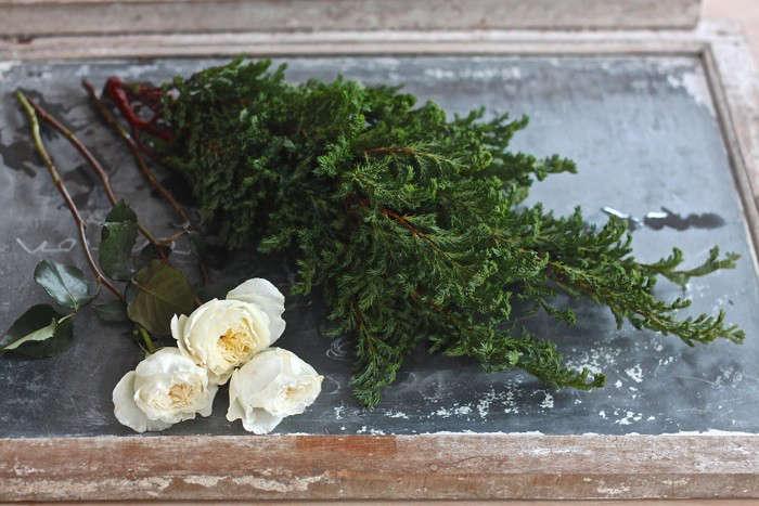 winter  20  romance  40    20  false  20  cypress  20  and  20  David  20  Austen  20  roses