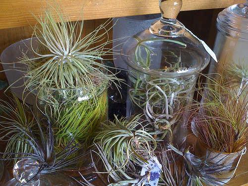 Accessories Hanging Terrariums  Vases portrait 4