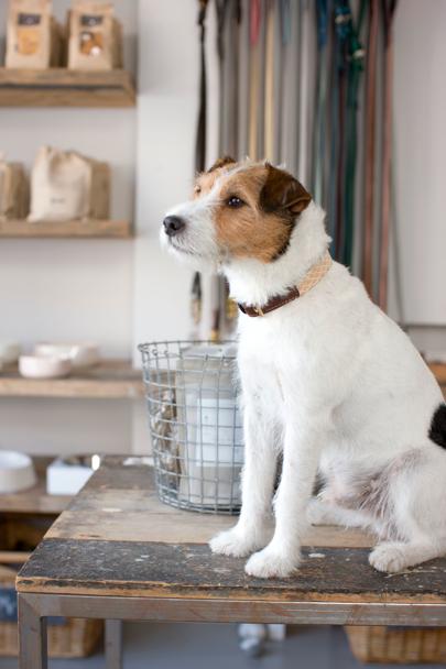 Leather Dog Collar from Mungo & Maud