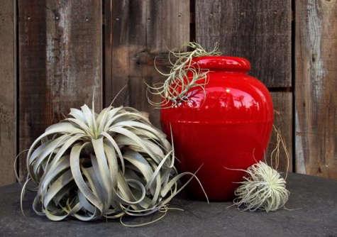 flora grubb red pot