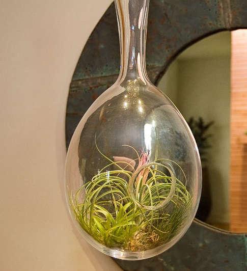 flora may hanging garden