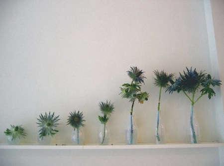 m co spiny vases
