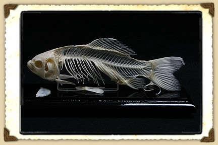 prod bone fish 11 06