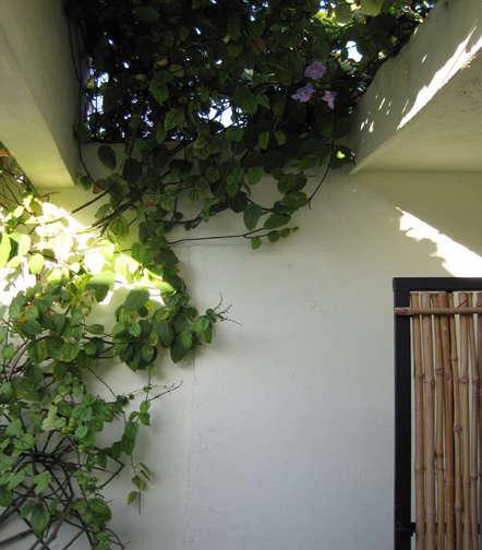 Architect Visit Ode Lab in Merida Mexico portrait 4