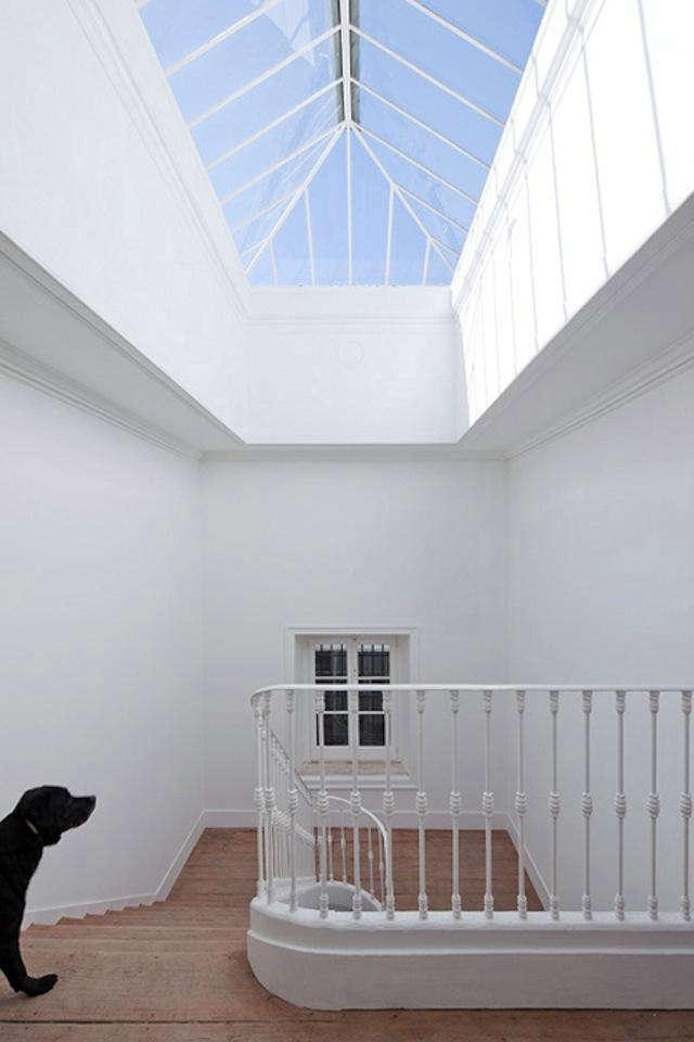 640 jose adriao dog stairway jpeg