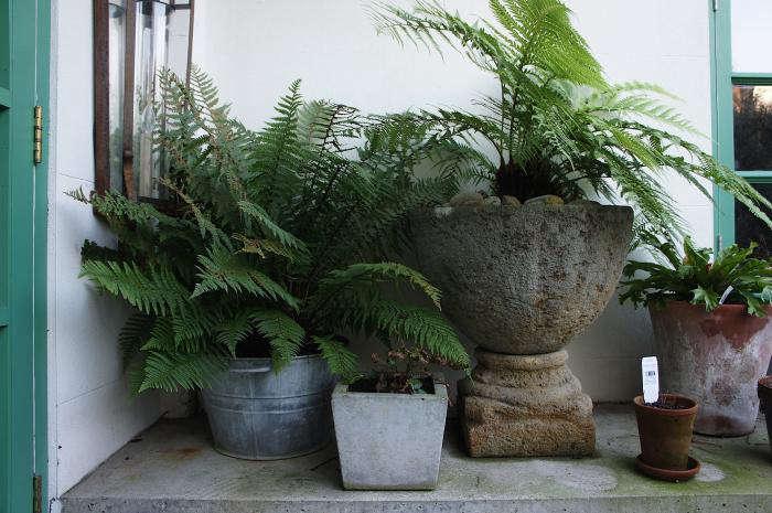 700 rmneisha crosland garden 05