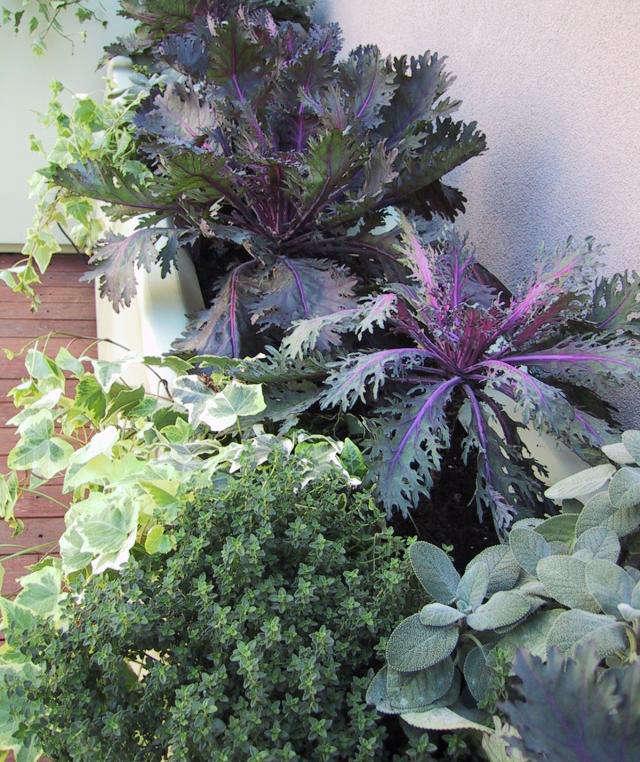 640 upload vb terrace plant detail