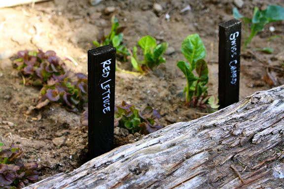 gardenista botanical marker plant stake