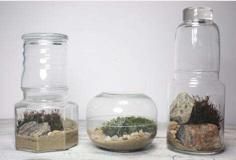 Accessories Terrariums from the Slug and the Squirrel portrait 6