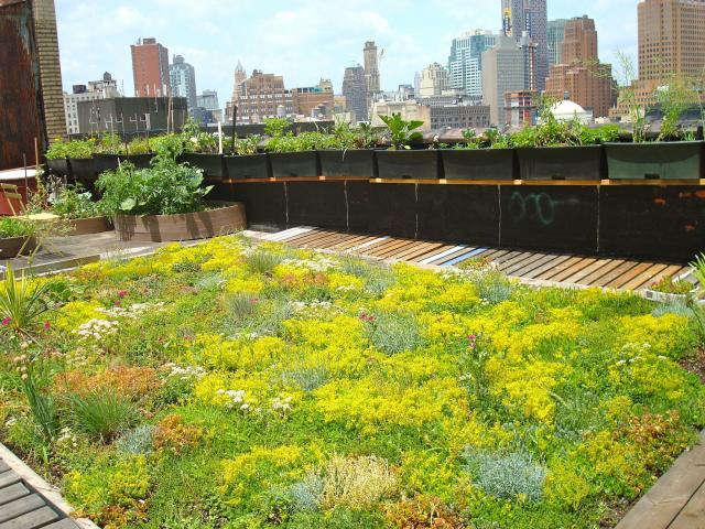 640 green roof garden 1
