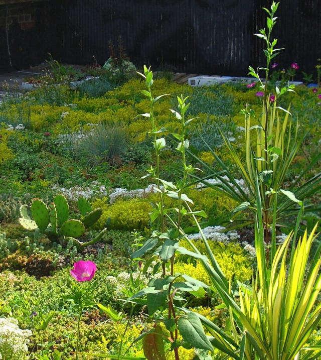 640 green roof garden 2