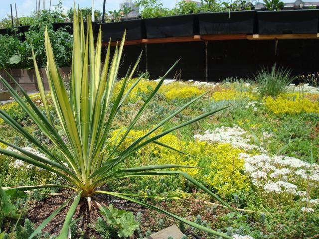 640 green roof garden 3