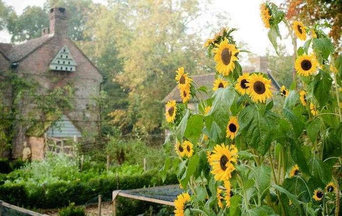 700 walnuts farm dovecote sunflowers