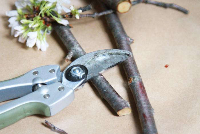 700 cherry branches and pruner