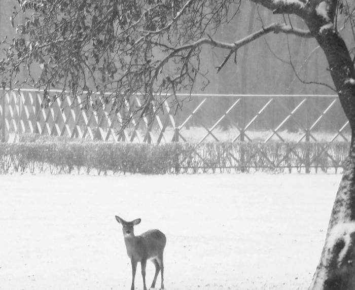 The Landscape Designer Is In Elegant Deer Fencing Hamptons Edition  portrait 10