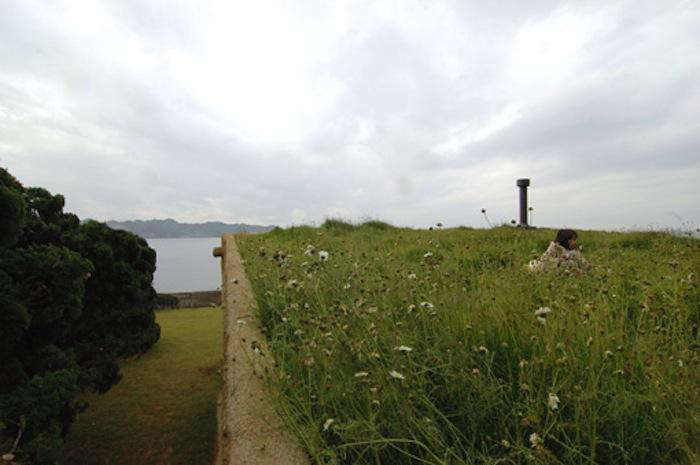 700 nap green roof house 1