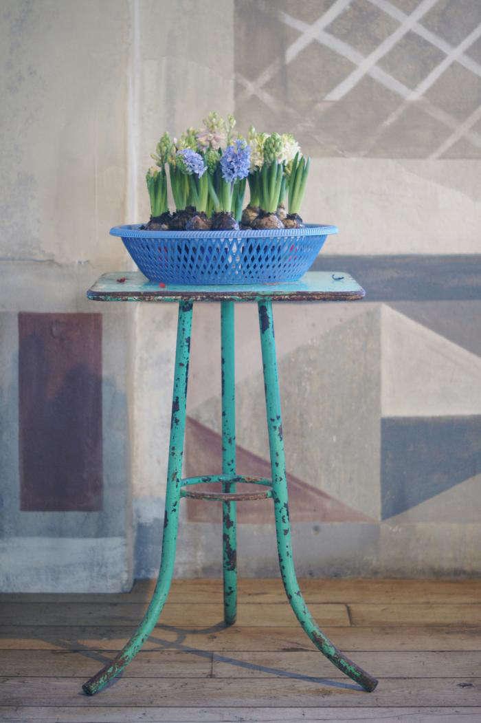 700 villa augustus hyacinths
