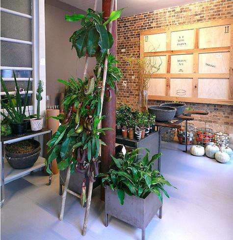 Shoppers Diary La Galerie Vegetale in Paris portrait 10