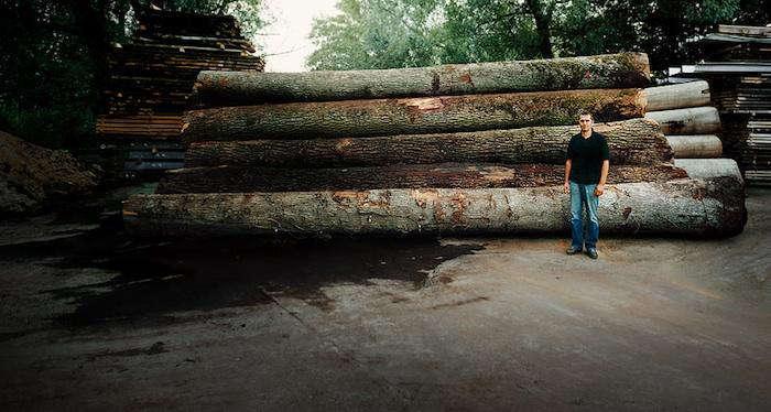 700 8 oak trees wiedemann