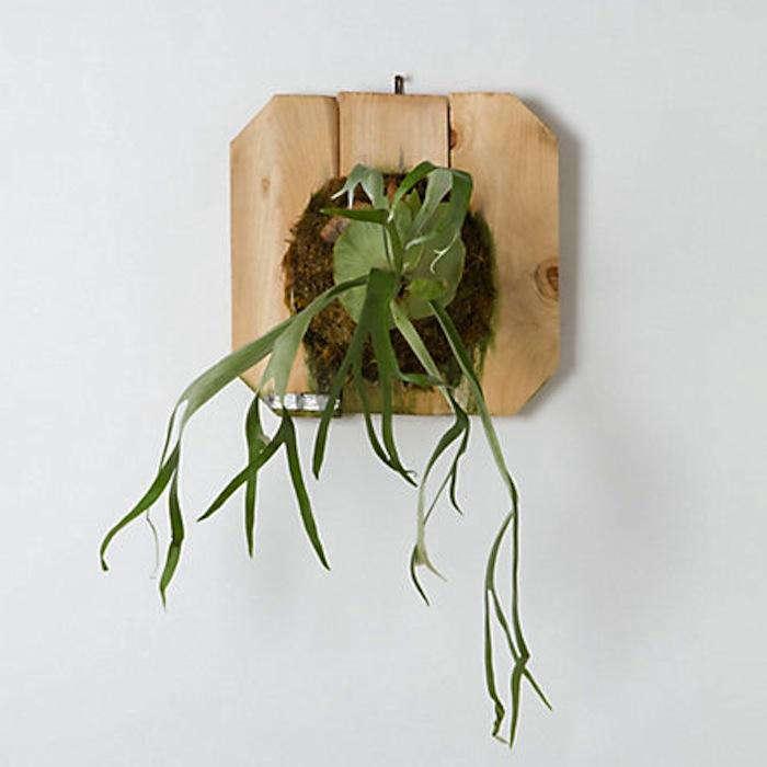 700 air plant fern jpeg