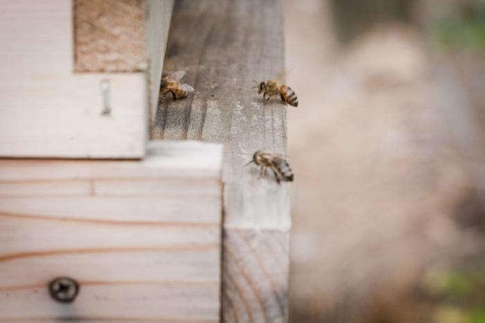 700 backyard beekeeping bees number one