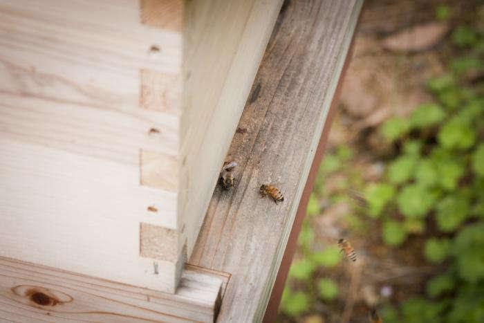 700 backyard beekeeping bees number three