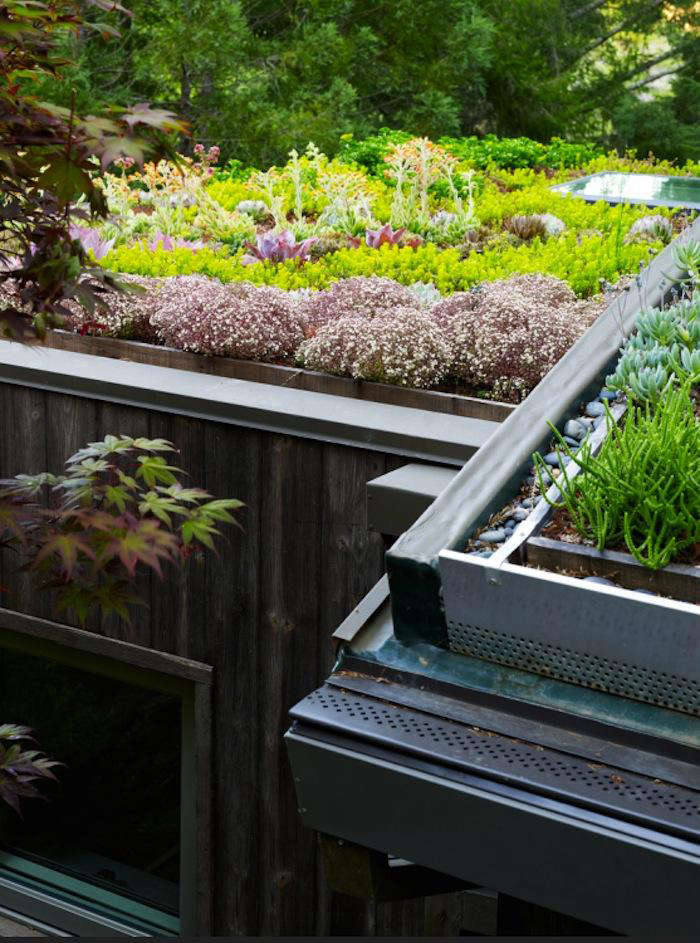 700 green roof feldman 1