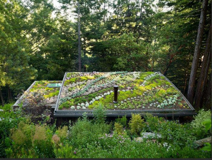 700 green roof feldman full view of roof