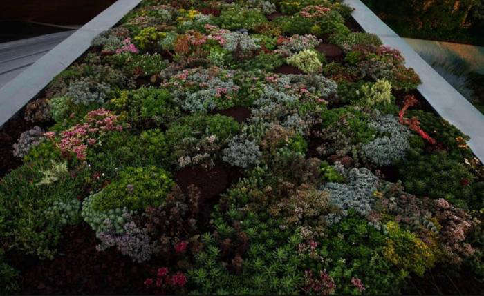 700 paula hayes roof with sedum