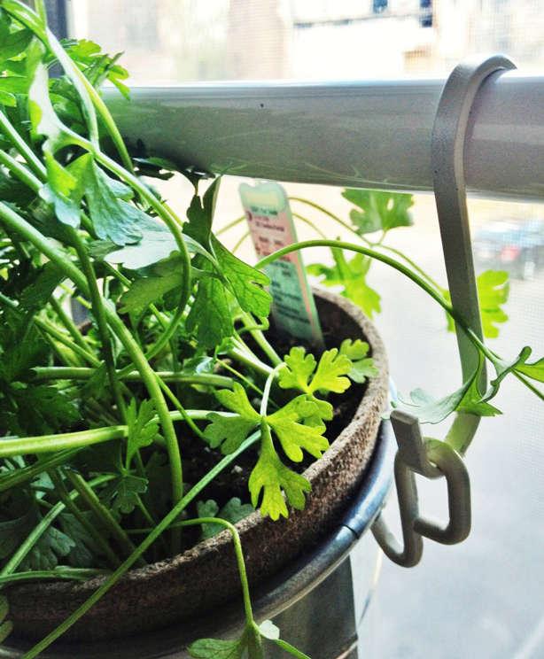ikea window herb planters closeup