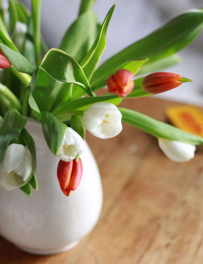 700 tulips in white pitcher