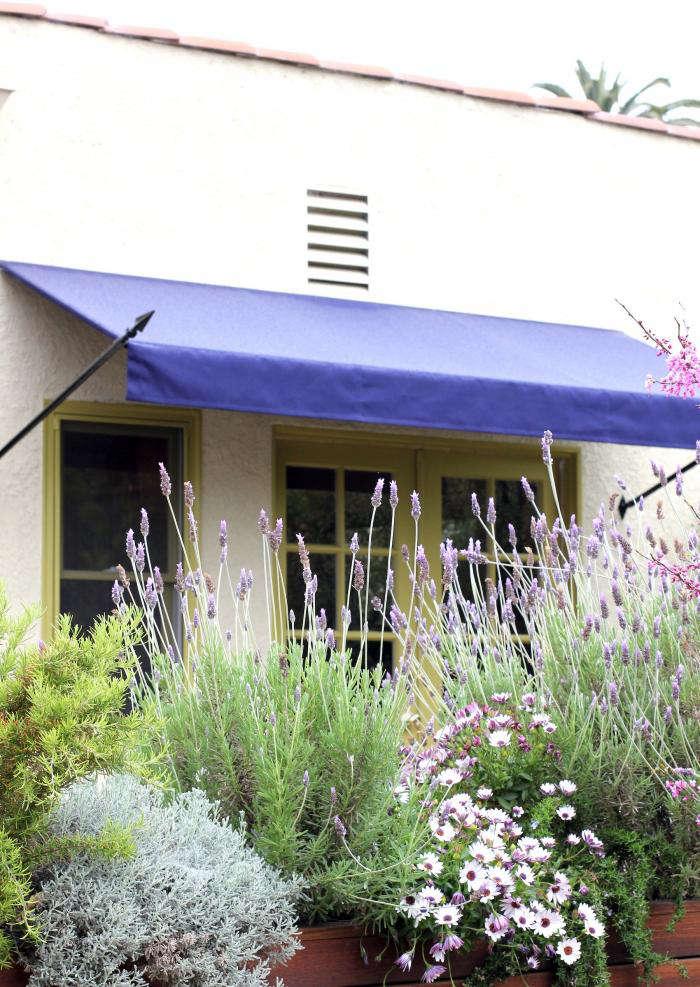 700 disc interiors exterior lavender 11
