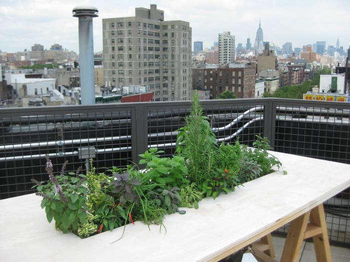 700 fat radish restaurant edible garden outdoors
