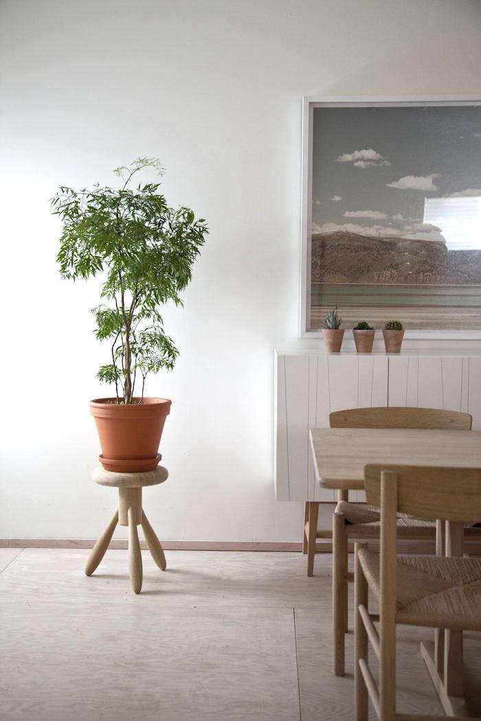 10 Compelling Reasons to Bring the Outdoors In A potted shrub Ming aralia in the house of John Baker and Juli Daoust.