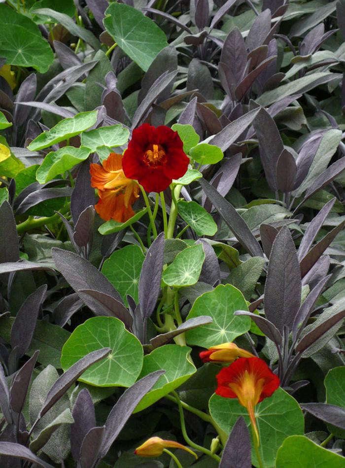The English Garden Edible Florals portrait 7