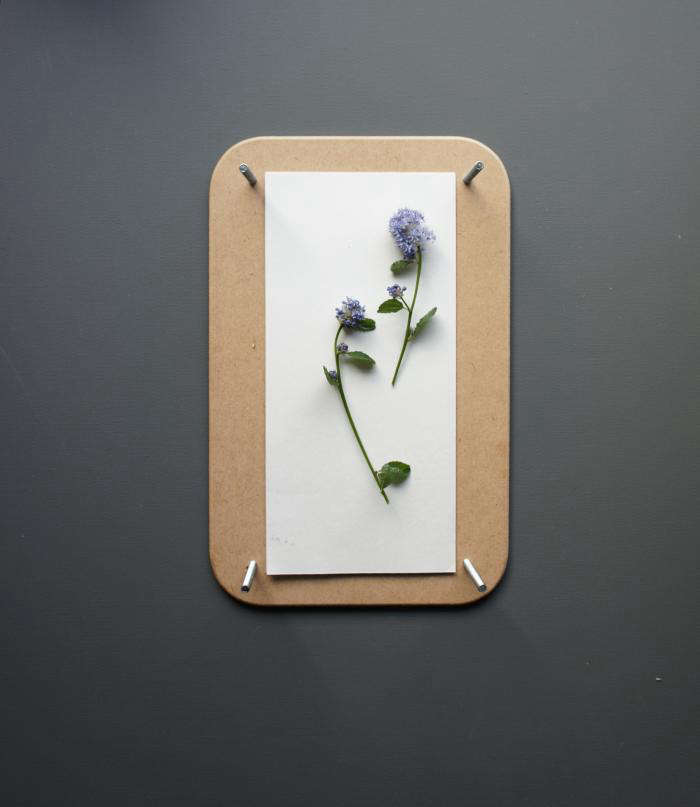 700 pressed flowers 05