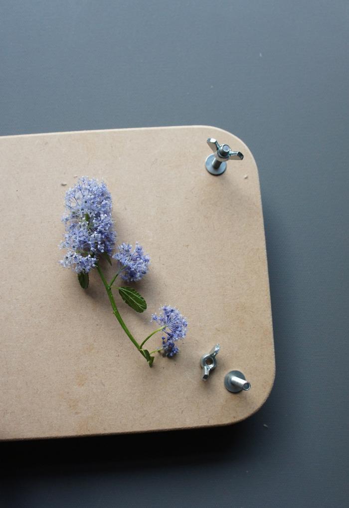 700 pressed flowers 06