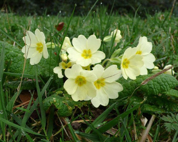 The English Garden Edible Florals portrait 6