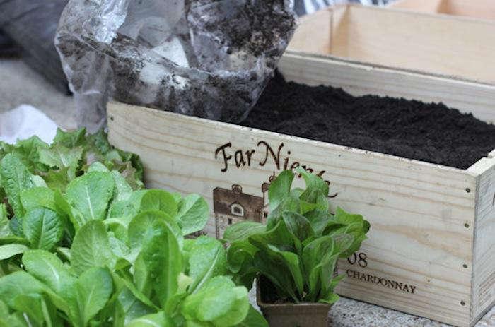 700 urban gardening raised beds 2