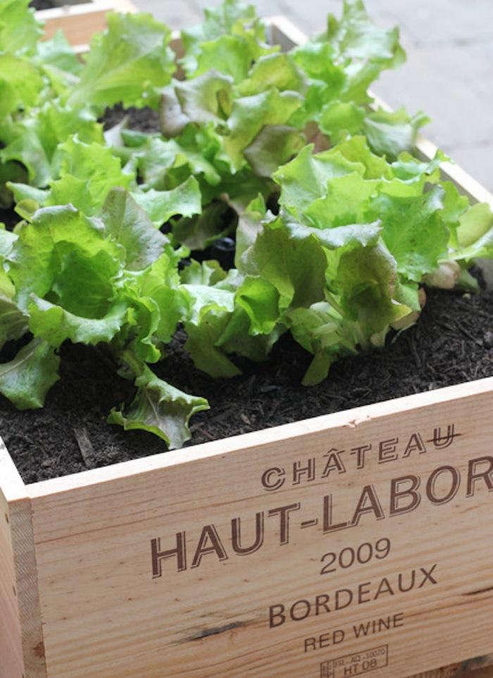 700 urban gardening raised beds 6