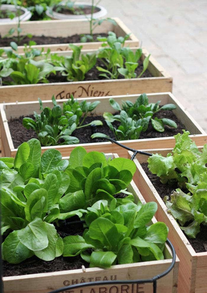 700 urban gardening raised beds 7