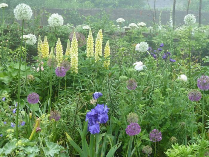 Gardenista Facebook Contest Share Your Garden to Win portrait 4
