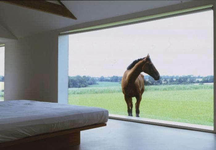 700 pawson tilty horse window