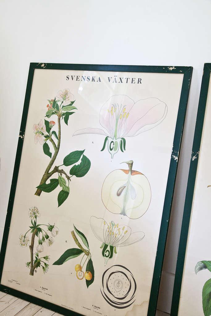 swedish botanical print kitka